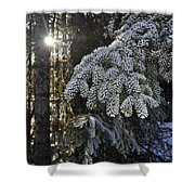 Forest In Winter Shower Curtain