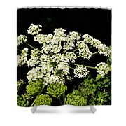 Forest Lace Shower Curtain