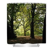 Forest Light And Shadows Shower Curtain