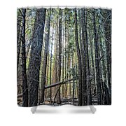 Forest Morning Shower Curtain