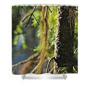 Forest Moss Shower Curtain