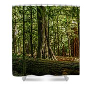Forest Of Cathedral Grove Collection 1 Shower Curtain