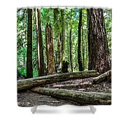 Forest Of Cathedral Grove Collection 2 Shower Curtain