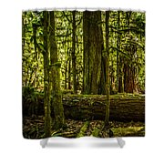 Forest Of Cathedral Grove Collection 3 Shower Curtain