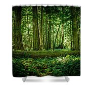 Forest Of Cathedral Grove Collection 7 Shower Curtain