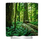 Forest Of Cathedral Grove Collection 8 Shower Curtain