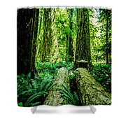 Forest Of Cathedral Grove Collection 9 Shower Curtain