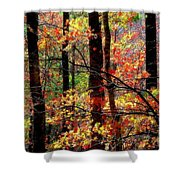 Color The Forest Shower Curtain