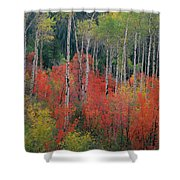 Forest Of Color Shower Curtain