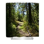 Forest Path In Spokane 2014 Shower Curtain