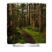 Forest Serenity Path Shower Curtain