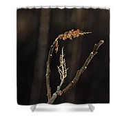 Forest Song Shower Curtain