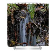 Forest Streamlet Shower Curtain