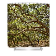 Forest Stroll - The Magical And Mysterious Trees Of The Los Osos Oak Reserve. Shower Curtain