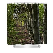 Forest Walk Hdr Shower Curtain