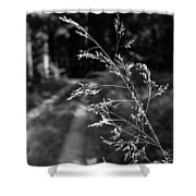Forest Web Shower Curtain