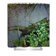 Forest Wetlands I Shower Curtain
