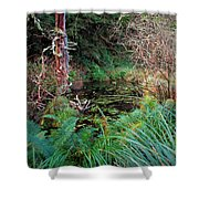 Forest Wetlands II Shower Curtain
