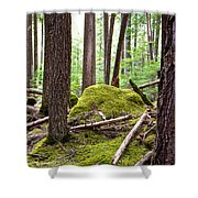 Forest With Moss-covered Rocks Along John's Lake Trail In Glacier Np-mt Shower Curtain