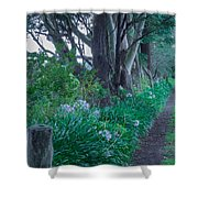 Forested Path Shower Curtain