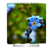 Forget Me Not Bloom Shower Curtain