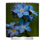 Forget Me Not Flower Shower Curtain