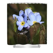 Forget Me Nots Springtime Shower Curtain