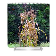 Forgotten Corn Stalks Shower Curtain