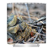 Forgotten Pine Cone 2 Shower Curtain