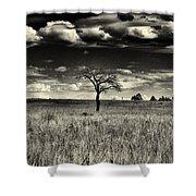 Forgotten Tree Shower Curtain
