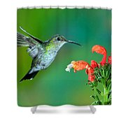 Fork-tailed Woodnymph Shower Curtain