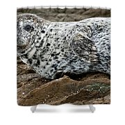 Forlorn Seal Shower Curtain