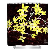 Forsythia Branches Shower Curtain