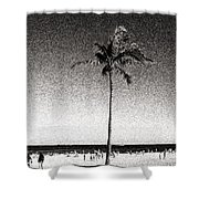 Fort Lauderdale Palm Tree Shower Curtain