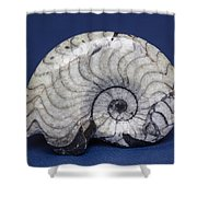 Fossilized Ammonite Shower Curtain