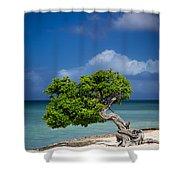 Fototi Tree - Aruba Shower Curtain