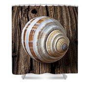 Found Sea Shell Shower Curtain
