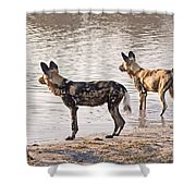 Four Alert African Wild Dogs Shower Curtain