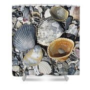 Four Beautiful Shells Shower Curtain