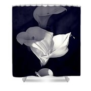 Four Calla Lilies In Shade Shower Curtain