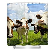Four Chatting Cows Shower Curtain