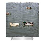 Four Ducks Shower Curtain