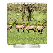 Four Elk Shower Curtain
