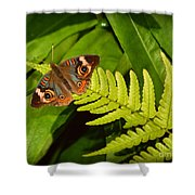 Four Eye Butterfly Shower Curtain