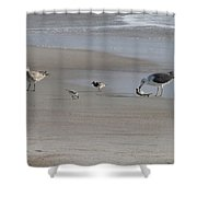 Four Feathers And A Fish Shower Curtain