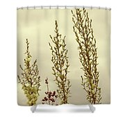 Four Shower Curtain