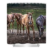 Four Horses E137 Shower Curtain