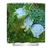 Forest Foursome Shower Curtain