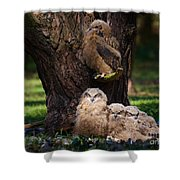 Four Owl Chicks In A Dark Forest Shower Curtain