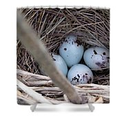 Four Red-winged Blackbird Eggs Shower Curtain by J McCombie